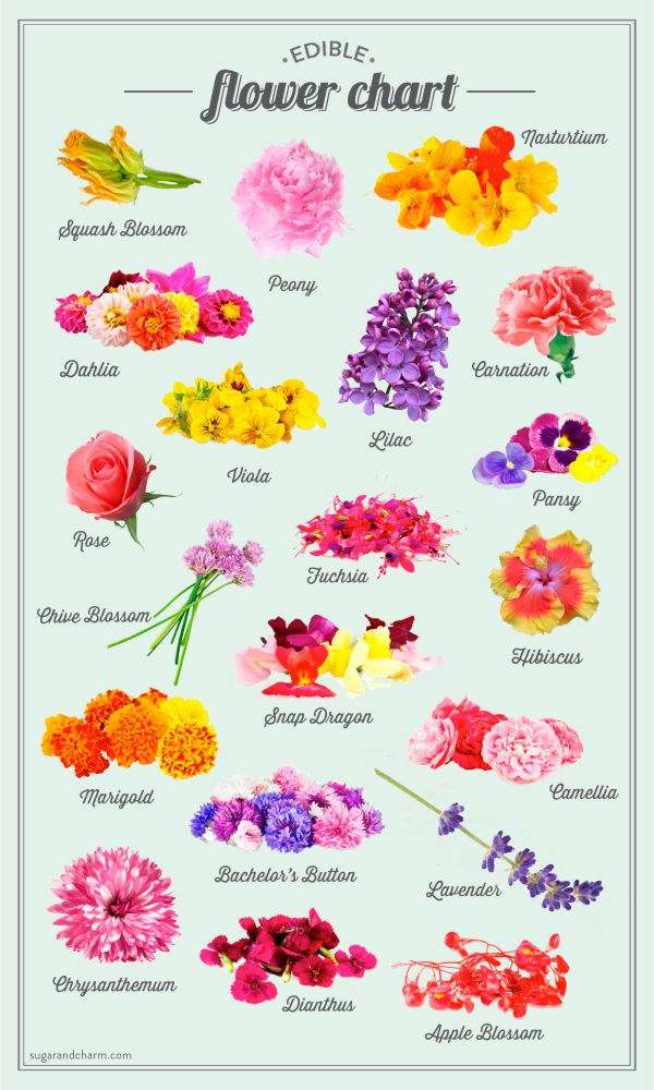 AWESOME EDIBLE FLOWER RECIPES PERFECT FOR SPRING  LushZone